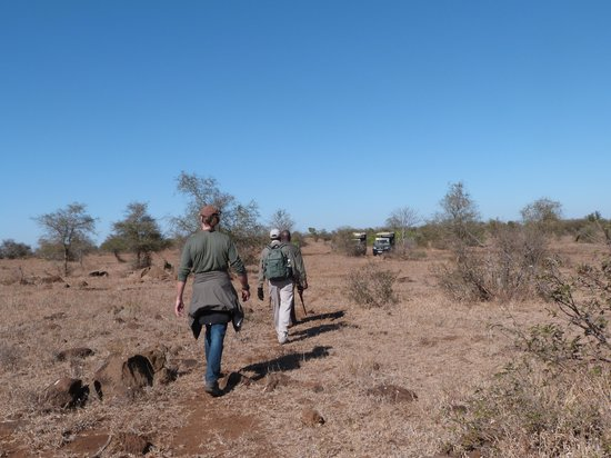 Olifants Rest Camp: a walk in the bush