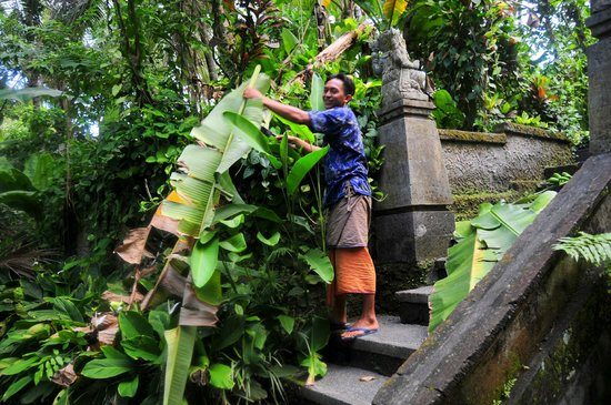 Kebun Indah : Made doing some gardening and cleaning up the grounds