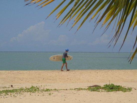 Rocco's Hotel : surfer
