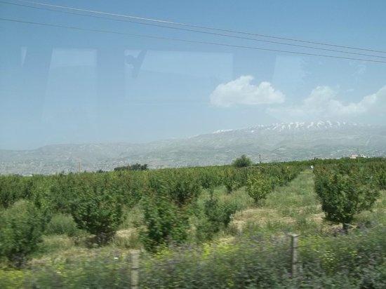 Libanon: Une vue de la Bekka de la vitre de la voiture