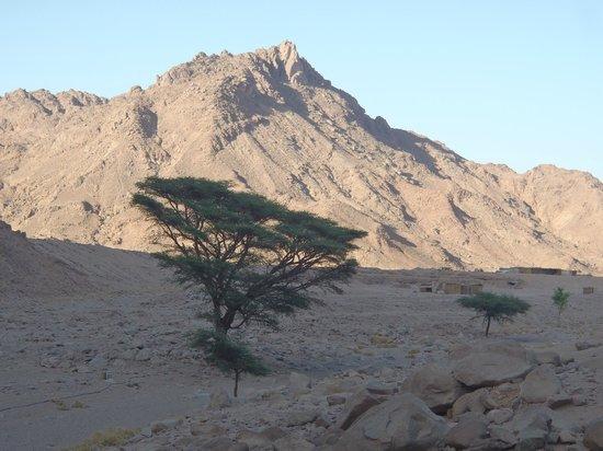 Sahara Desert: Contrast
