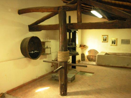 Azienda Agricola Vasari