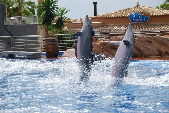 Marineland Majorca : Marineland i Palma