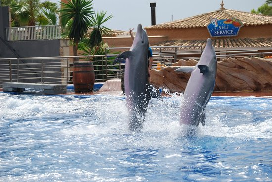 Marineland Mallorca: Marineland i Palma