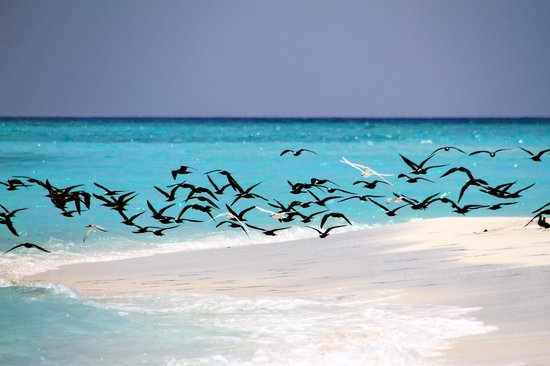 Baa Atoll : 12