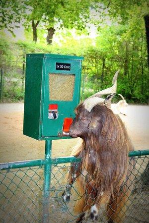 Tierpark Hellabrunn: Wer hat 50 Cent