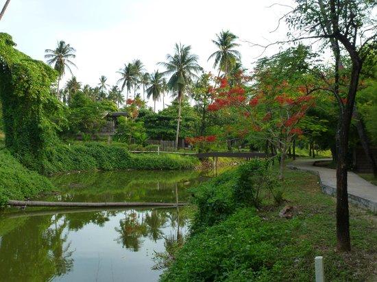 Koh Mak Resort: kanal and gardens behind the bungalows