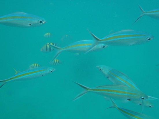 Koh Mak Resort: snorkeling trip