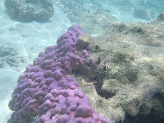 Koh Mak Resort : corals