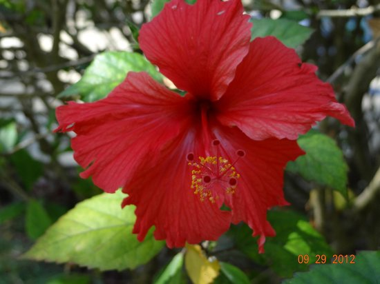 Travellers Beach Hotel & Club: Beautiful flowers in the grounds