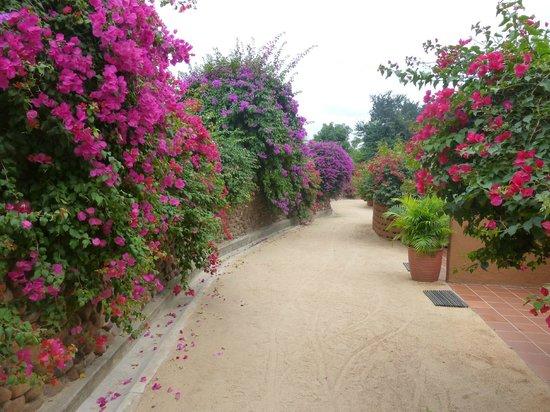 MalaMala Main Camp: un hermoso camino a las abitaciones.
