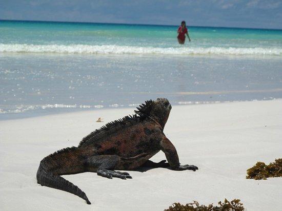 Tortuga Bay Picture Of Galapagos Beach At Tortuga Bay