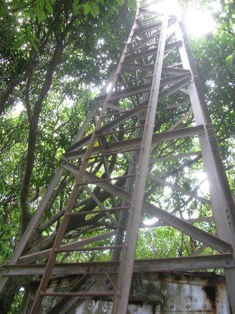 """Grace's Place : The 'Lookout Tower"""""""