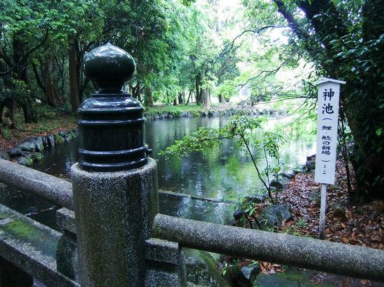 Miyazaki Shinto Shrine : 神池