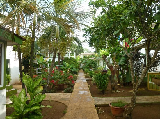 Hotel Los Delfines: Beautiful Hotel Grounds