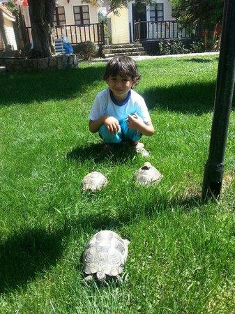 Nova Beach: die Nova Schildkröten