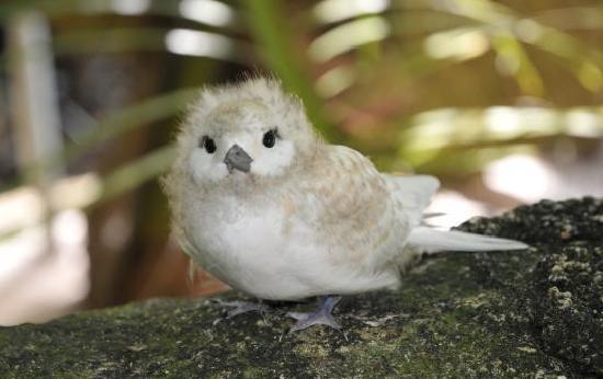 Le Chateau de Feuilles: oiseau