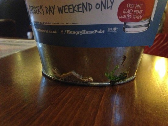 Hungry Horse - The Turf Tavern: These are not cleaned daily,more likey weeky