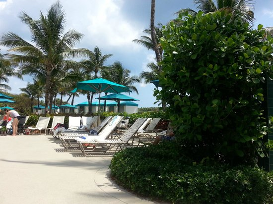 Marriott's Ocean Pointe: Pool area