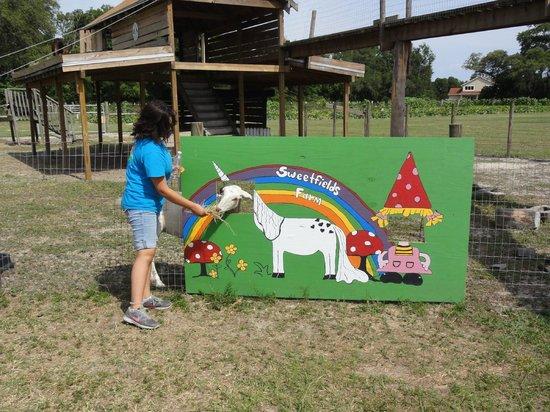 Sweetfields Farm: BILLY GOAT PIC