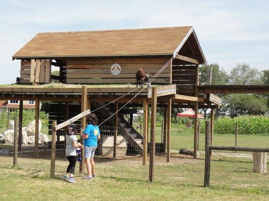 Sweetfields Farm: GOAT CONDO
