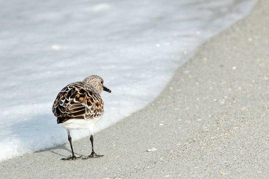 Bowman's Beach: Walk on the beach