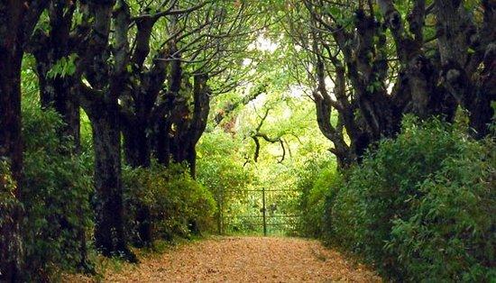 Agriturismo di Villa Mongalli: Viale dei tigli