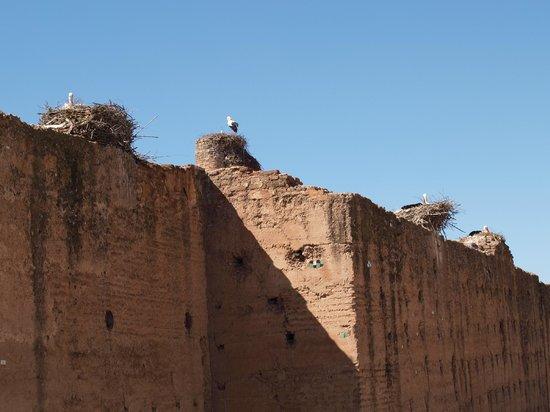Riad Turquoise : Les cigognes du Palais