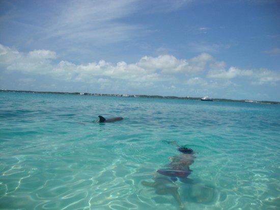 Bagno con delfini picture of stocking island great exuma tripadvisor - Bagno coi delfini roma ...