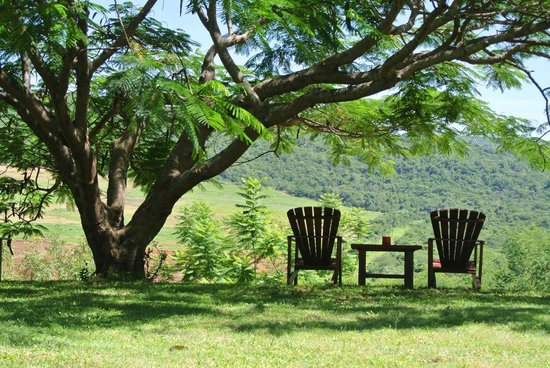 Abangane Guest Lodge: onder de boom