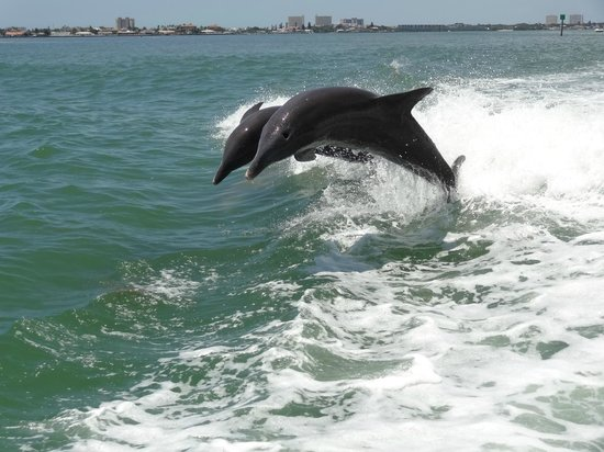 Dolphin Racer: Dolphins Surfing