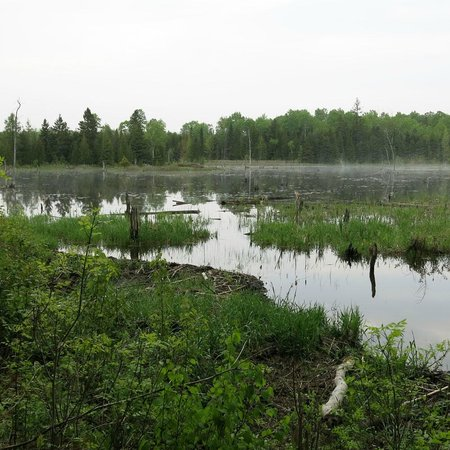 Natural High Bed & Breakfast: beaver lake, about 0,5km