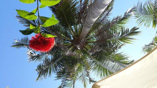 Kata Beach Resort and Spa: Вид с лежака под пальмой