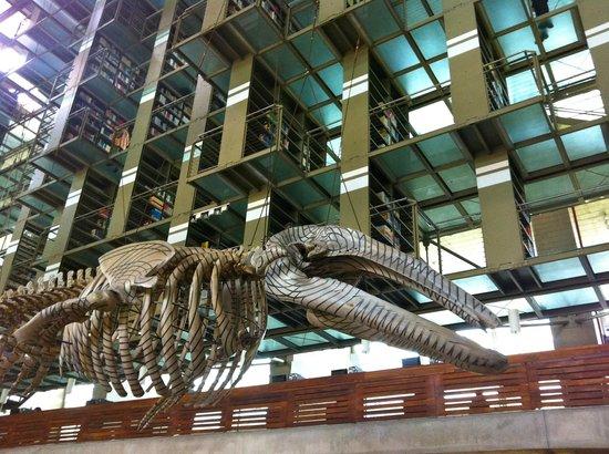 Biblioteca Vasconcelos : Mátrix móvil, obra de Gabriel Orozco basada en la estructura ósea de una ballena gris