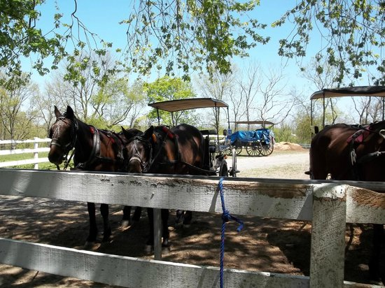 Ed's Buggy Rides: A very nice waiting area under a tree.