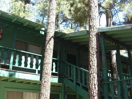 TimberLodge Inn: Built around the trees