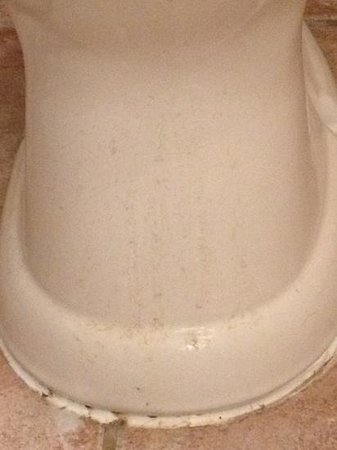 The Old Priory: old urine stains on the toilet