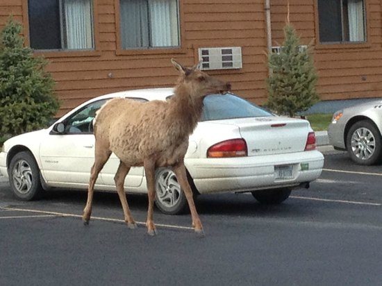 Yellowstone Village Inn: One of the four legged guests