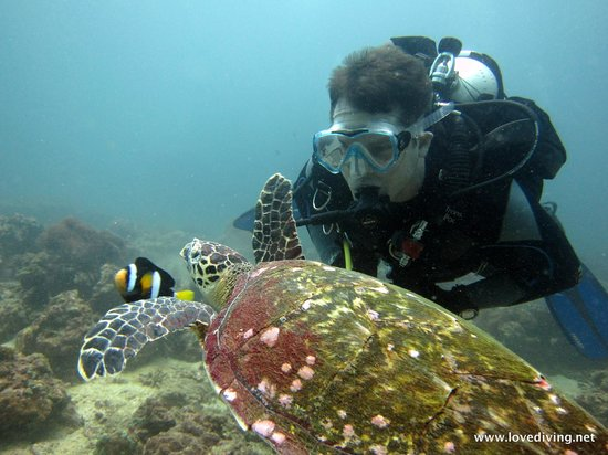 Love Diving Phuket: Student and Turtle
