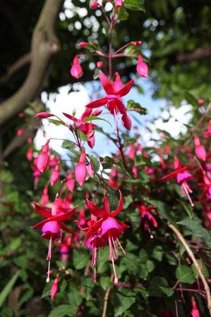 Gattacicova: fioritura di maggio