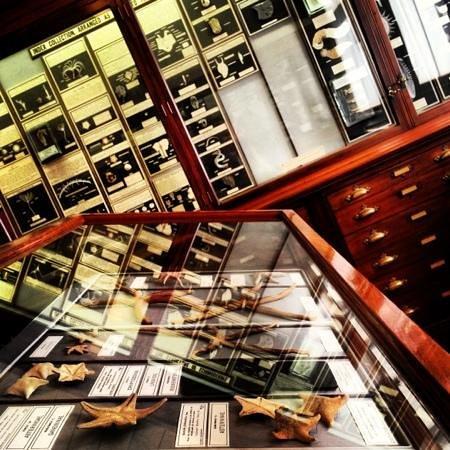 Royal Albert Memorial Museum: history