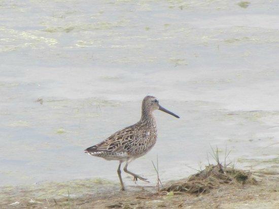 Congress Hall: Shore bird
