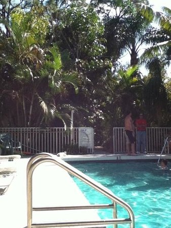 Grove City Motel : jungle like pool area. can't wait to go back!