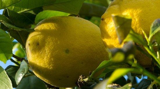 Cambiocavallo - Unesco Area & Resort : Vom Baum auf den Tisch