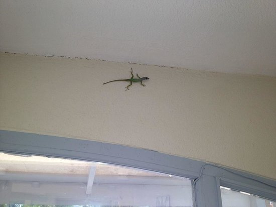 Time Out Hotel: Beautiful green lizard upon entering the pool.