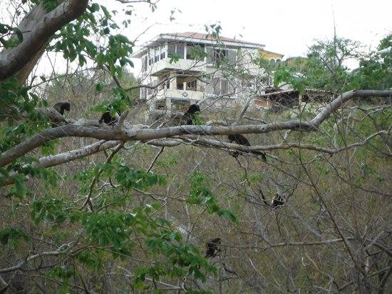 Howlers in trees, Casa del Soul in background