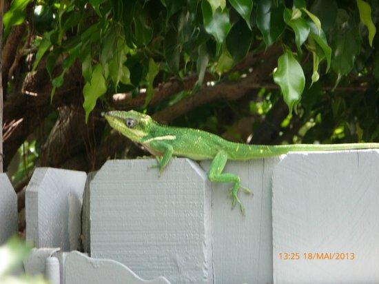 The Cabanas Guesthouse & Spa: un lézard dans le jardin