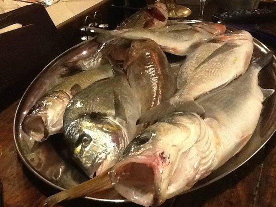 Bagno Conchiglia Castiglioncello : Fritto misto picture of ristorante la conchiglia