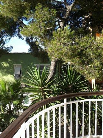 Hotel Gabriella : Pines both in the Crimea