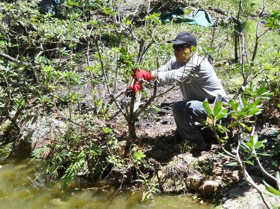 Jardinier tailleur picture of morikami museum japanese for Jardinier 78